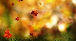 падающие листья, трава, желто-зеленый фон