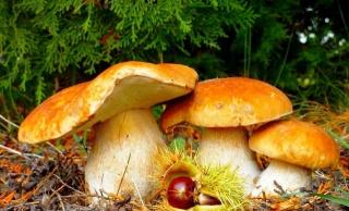 грибы, каштан, деревья, трава, опавшие листья