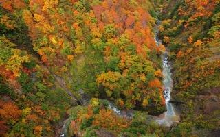 лес, река, ущелье, СВЕРХУ