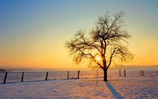 morning, sunrise, tree, sky, snow