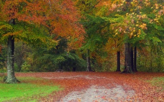 autumn, tree, leaves, rock, green