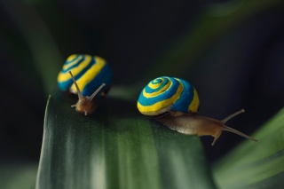 photo, macro, creative, snails, positive
