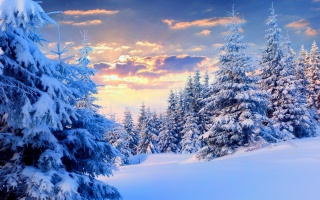 zima, les, krásně, nebe, mraky, západ slunce, bílé pozadí, světlo, slunce