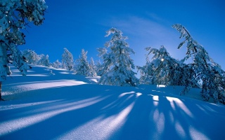 zima, sníh, krásně, bílé pozadí