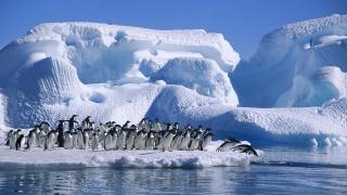пингвины, лед, снег, воды, дикий