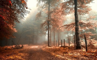 foggy, autumn, forest, leaves, grass