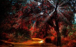 forest, autumn, tree, sunlight, ray of light