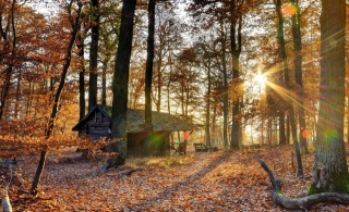 nature, autumn, the house, the rest, hunting, forest, beautiful, light, the sun