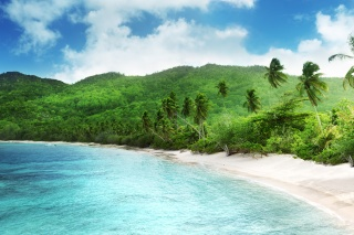 summer, island, summer, palm trees, jungle, Paradise, beautiful, the ocean, nature, the sky, clouds, tropics