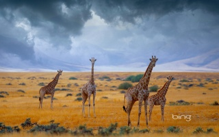 Namibia, Africa, giraffes, the sky, clouds