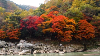 autumn, trees, forest, river, stones, beauty