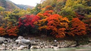 осень, деревья, лес, река, камни, красота