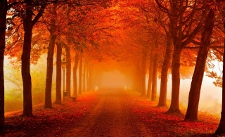 nature, autumn, morning, beautiful, trees, Alley, road