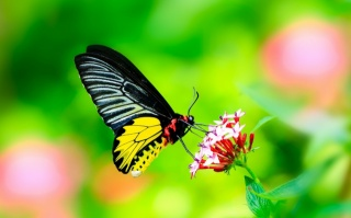 macro, photo, theme, butterfly, flower, nature, beautiful