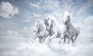 fantasy, art, picture, horses, trio, white background, clouds