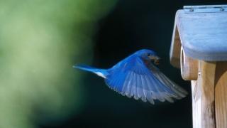 house, bird, blue, fly, wild