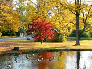 природа, осінь, парк, будиночок, ставок, гуси