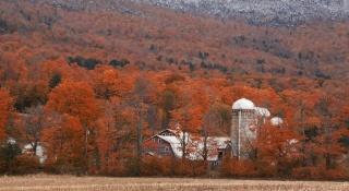 рослинність, споруди, поле, осінь