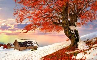 дерево, листья, дом, путь, снег