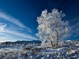 небо, горы, снег, одинокое дерево, зима