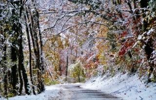 природа, зима, или, поздняя осень, лес, дорога, снег, первый снег