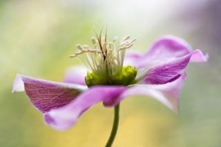macro, photo, theme, flower, nature
