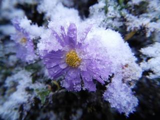 déšť, sníh, led, podzim, chlad, mráz, květina, makro
