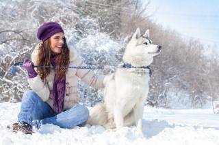 zima, krása, собачница, лайка, sníh, mráz