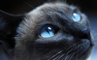 кошка, кошечка, кот, котяра
