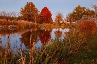 природа, осінь, ставок, озеро, очерет, відображення
