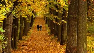 дерева, Алея, опале листя, двоє...