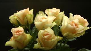 květiny, růže, makro