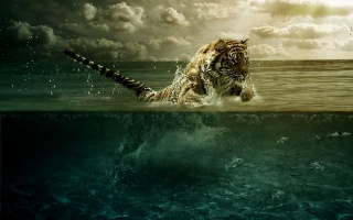 Tiger, water, fish, ocean