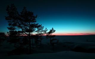 деревья, зима, снег, закат