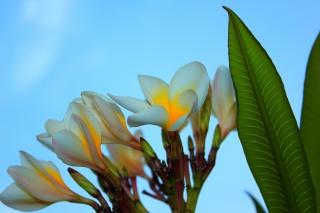 Egypt, květiny, léto