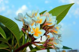 květiny, léto, nebe, Egypt