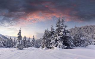 Зимний рассвет, хвойные деревья, облака, снег