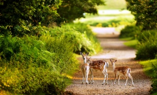 the edge of the forest, calves