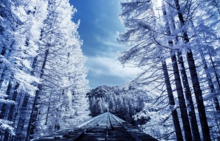 winter, railway, the way, forest, beautiful, mountains, light, the sun