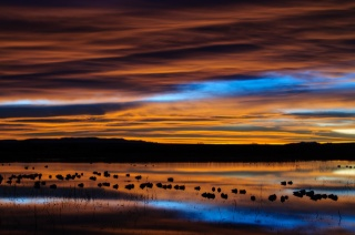 New Mexico, reserve, the lake, reflection, birds, morning, dawn, the sky, clouds