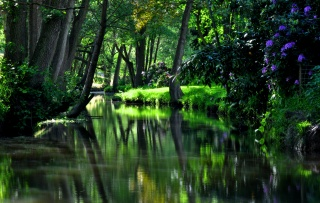 trees, green, Park, water, reflection, grass, beautiful, cool, well, flowers