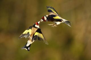 příroda, makro, foto, téma, ptáci, let, krásně