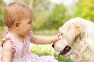 child, dog, each, macro, photo, positive