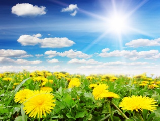 nature, summer, field, flowers, dandelions, the sky, clouds, the sun