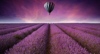 природа, повітряна куля, красиво, фіолет фон