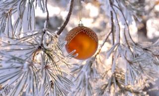 zima, příroda, les, makro, foto, novoroční koule