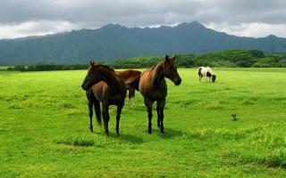 hory, stromy, louka, пасущиеся koně