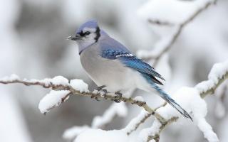 ветка, зима, снег, птица