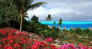 oceán, palmové, květiny, bungalovy, tropický ráj