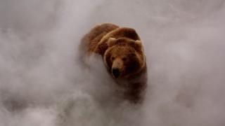 животные, медведь, медведь в тумане